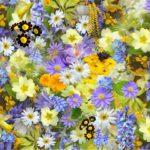 夏の花でガーデニング、多年草の魅力一挙公開!お家時間を楽しもう♪