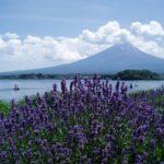 山梨県富士大石ハナテラス「壱の蔵」おすすめや口コミと通販について